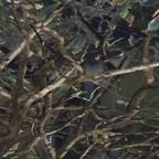 Parken im Baum
