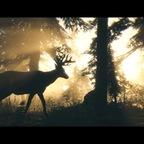 Red Dead Redemption 2_Storymodus_Screenshot (16)